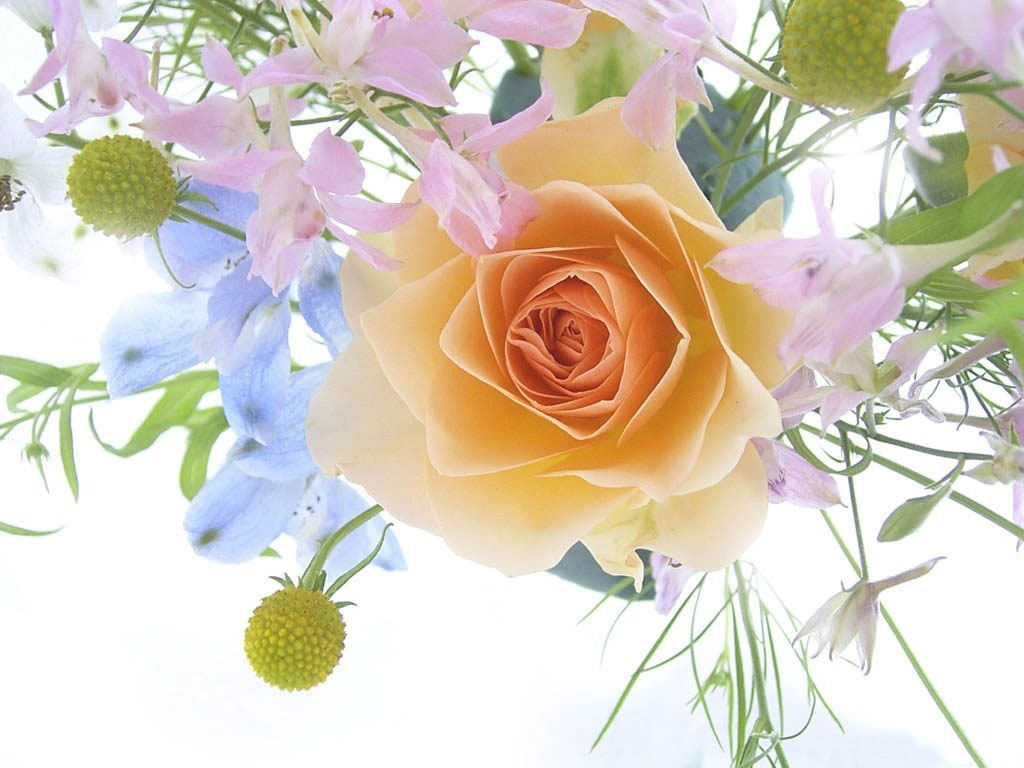 Мускусные розы фото сорта и уход  Сайт о саде даче и