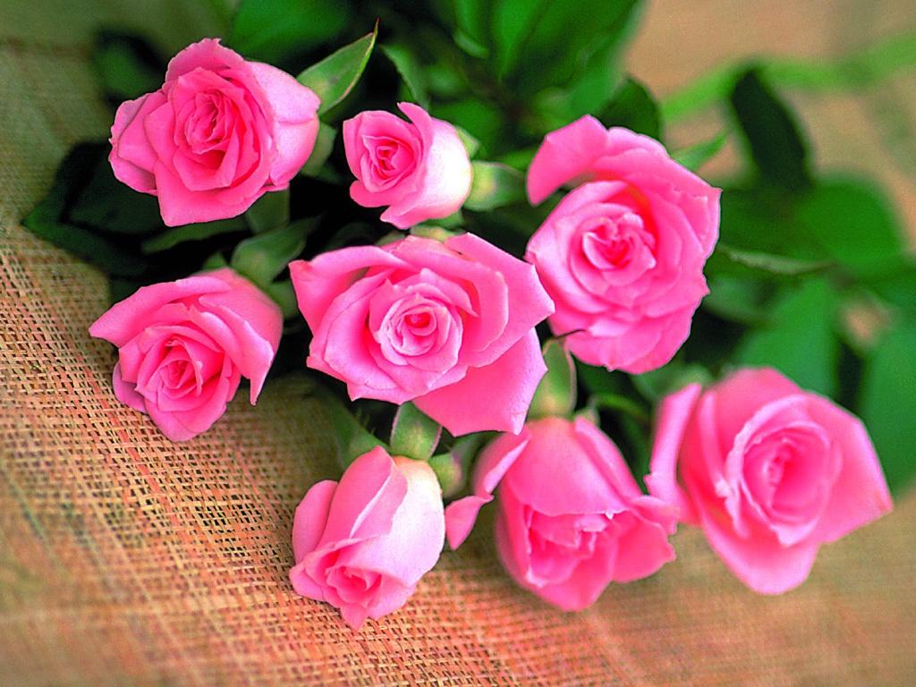 Картинки цветов красивые