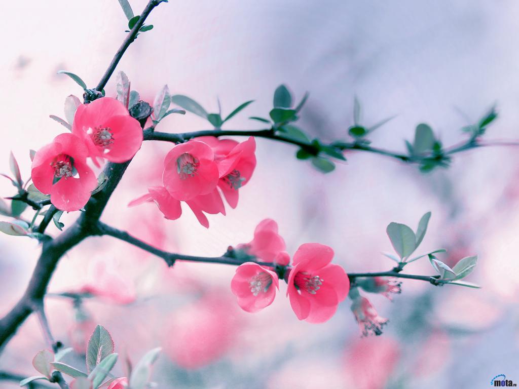Цветы природа картинки на аву