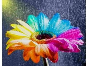 Картинки на аву лето цветы