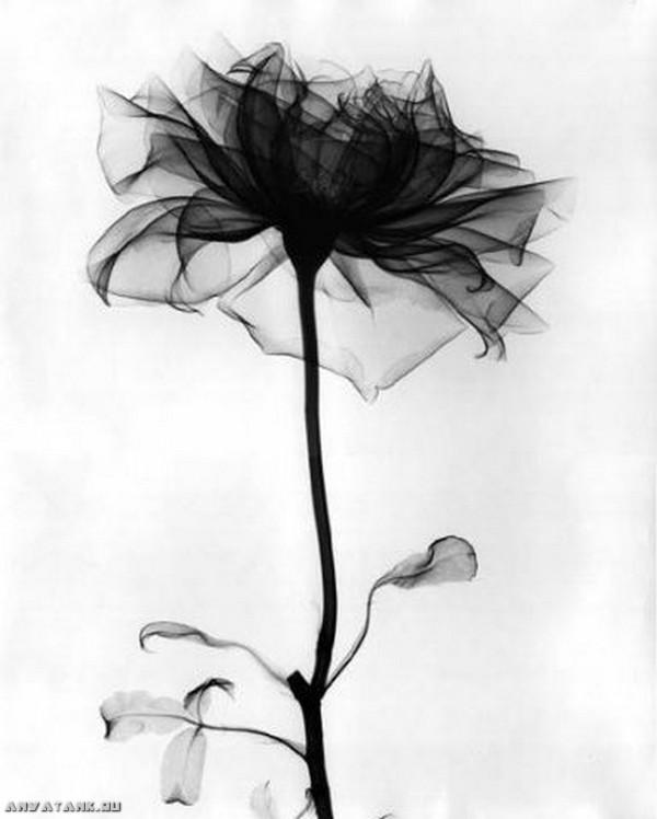 черно белая цветка картинка