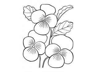 Цветы картинки раскраски распечатать