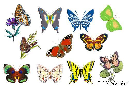 картинки бабочки нарисованные карандашом