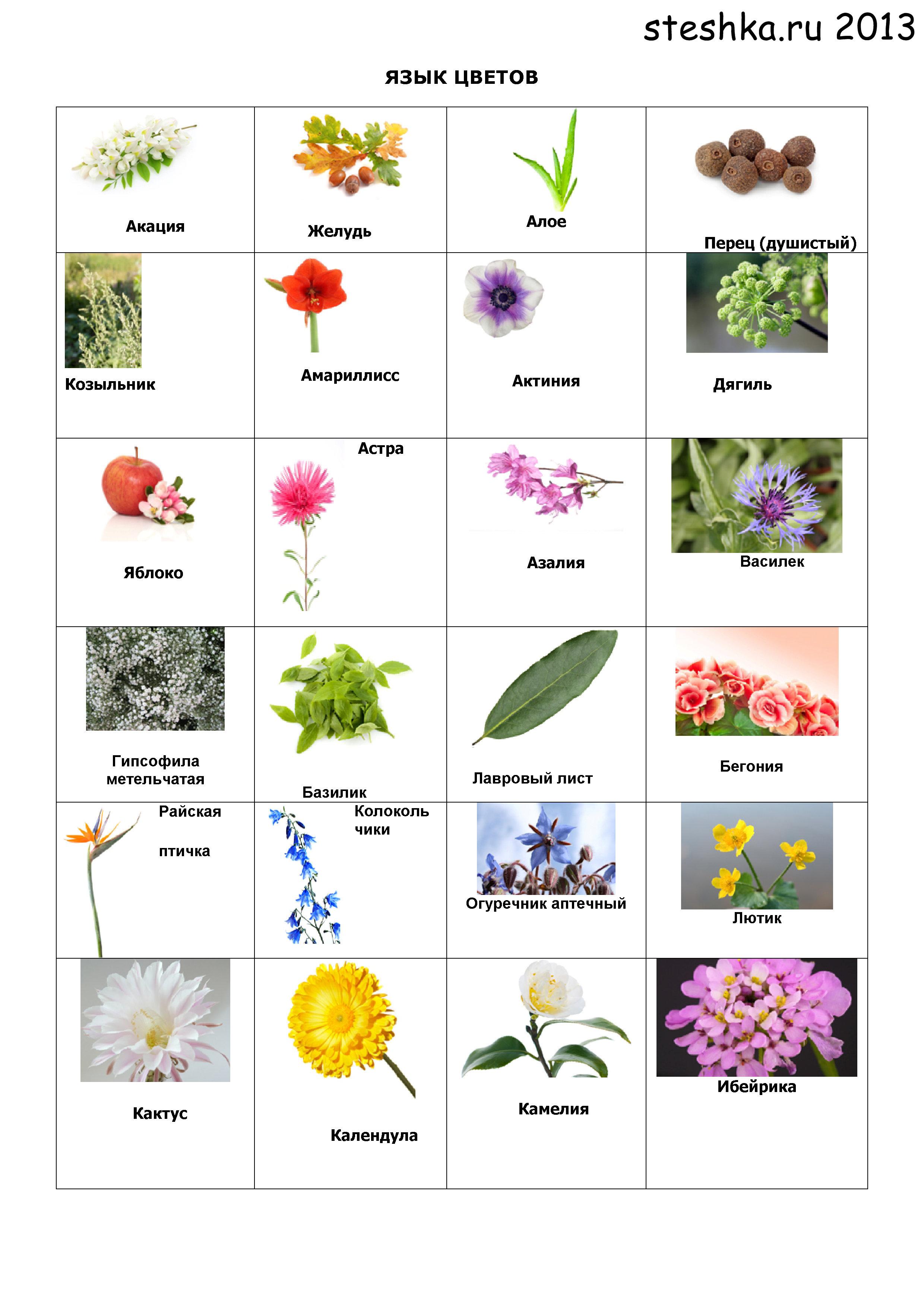 название цветков и