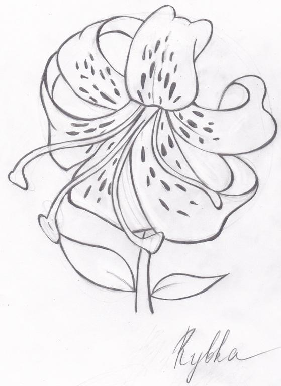 цветы картинки простым карандашом