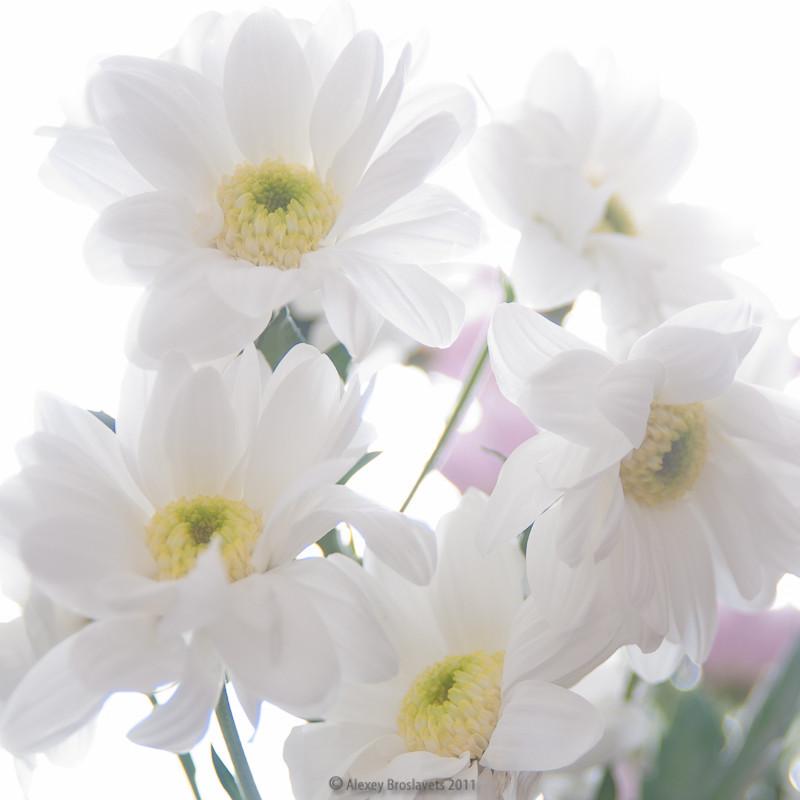 Разведение роз для начинающих  выращивание уход обрезка