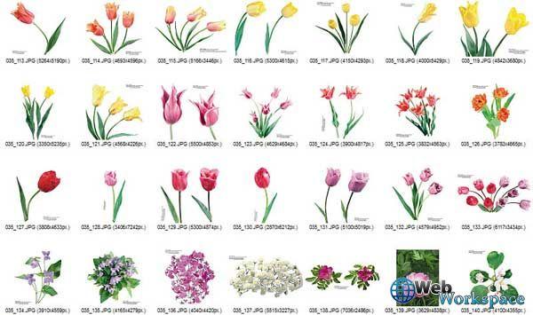 Виды цветов рисунок