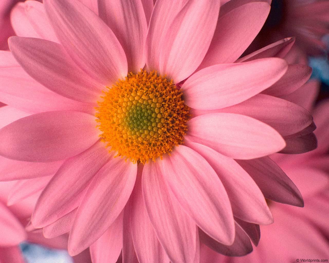 Фото очень красивых цветов 15 фотография