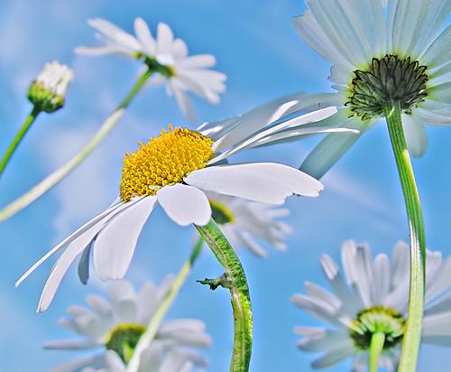 большие фото цветов: