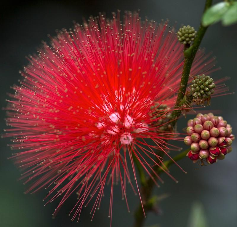 Необычный цветок и описание 9