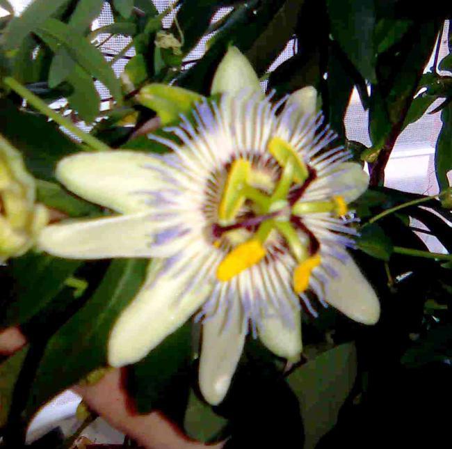 Необычный цветок и описание 96
