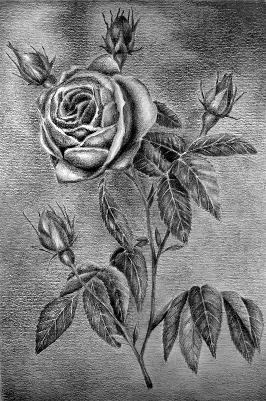 Рисунок цветы карандашом простым