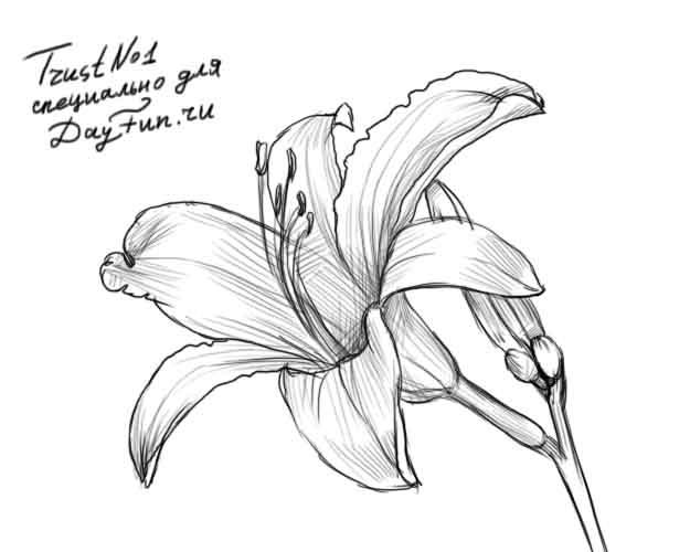 Картинки для срисовки цветы ...: dreempics.com/flowers/1705-kartinki_dlya_srisovki_tsvete...