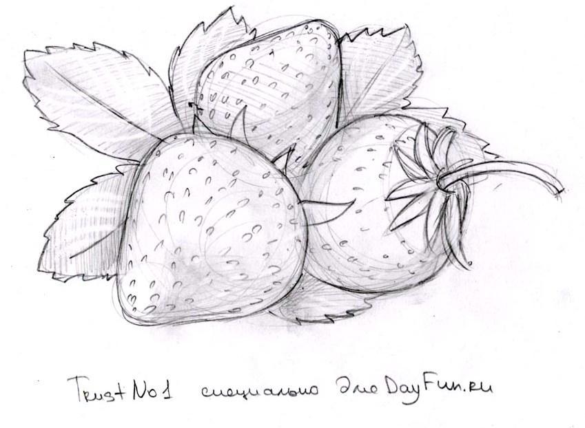 Красивые картинки для срисовки цветы »  - картинки и рисунки на рабочий стол бесплатно