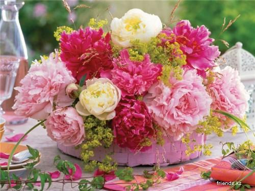 Цветы пионы самые красивые картинки - 8ab