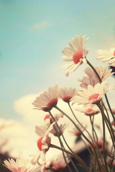 Профессионально цветов