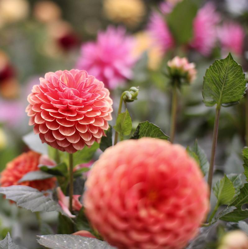 Фото цветов в хорошем качестве