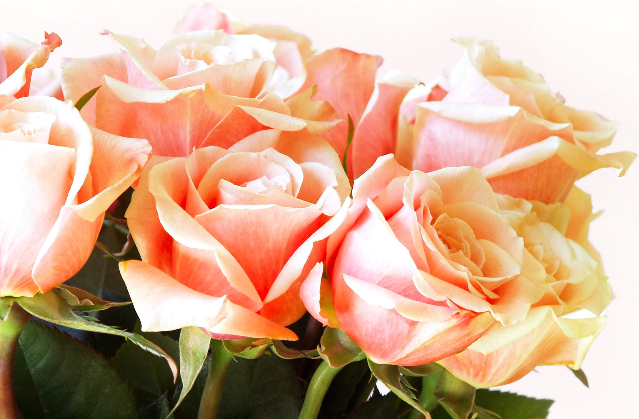 Цветы  в хорошем качестве