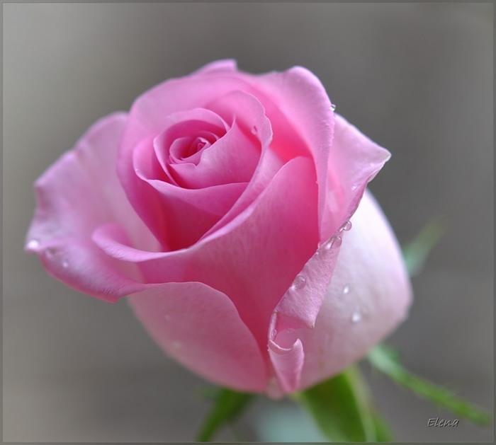 цветок красивый