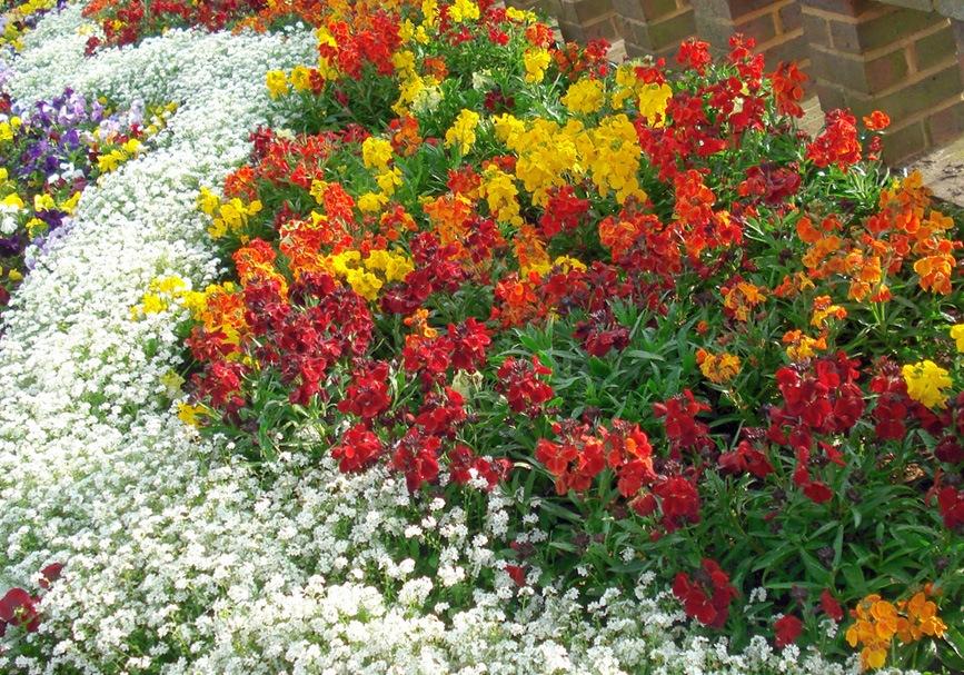 Выращивание однолетних и многолетних цветов 9206
