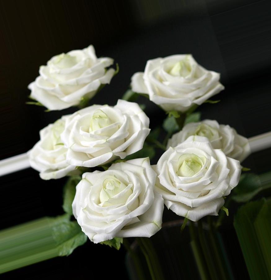 Фото белые розы много