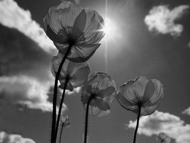 картинка цветок черно белая: