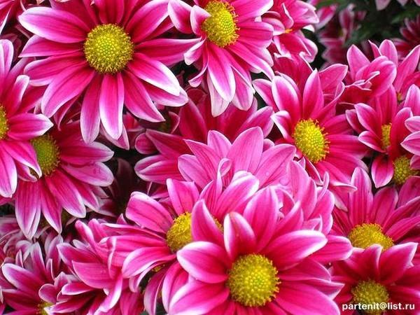 Красивые картинки ночь и цветы