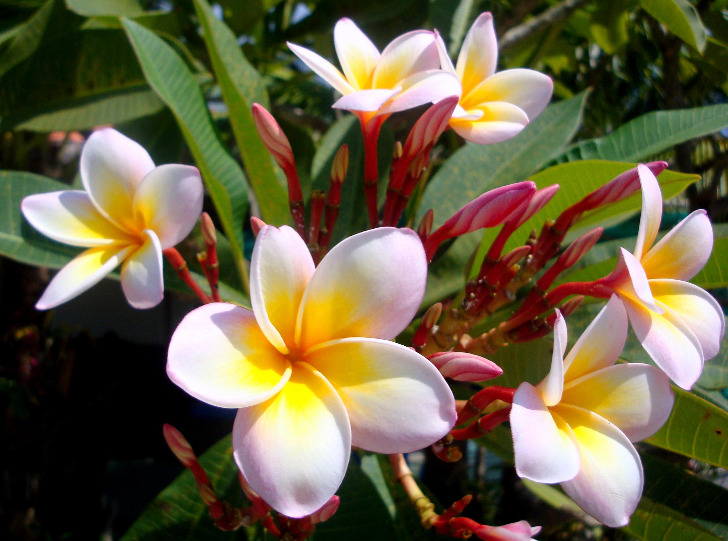 Скачать бесплатно фото с цветами