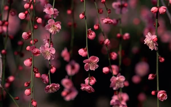 Цветы фото бордовые