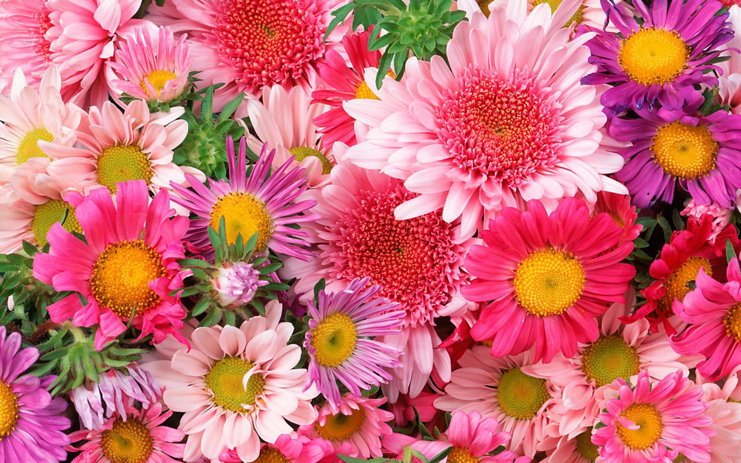 Фото очень красивых цветов 18 фотография