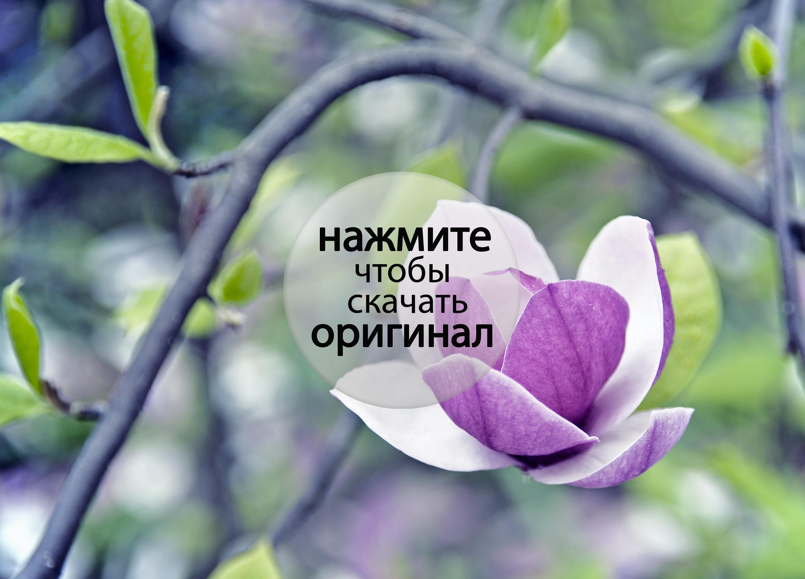 Цветы и травы в картинках заданиях стихах и рассказах