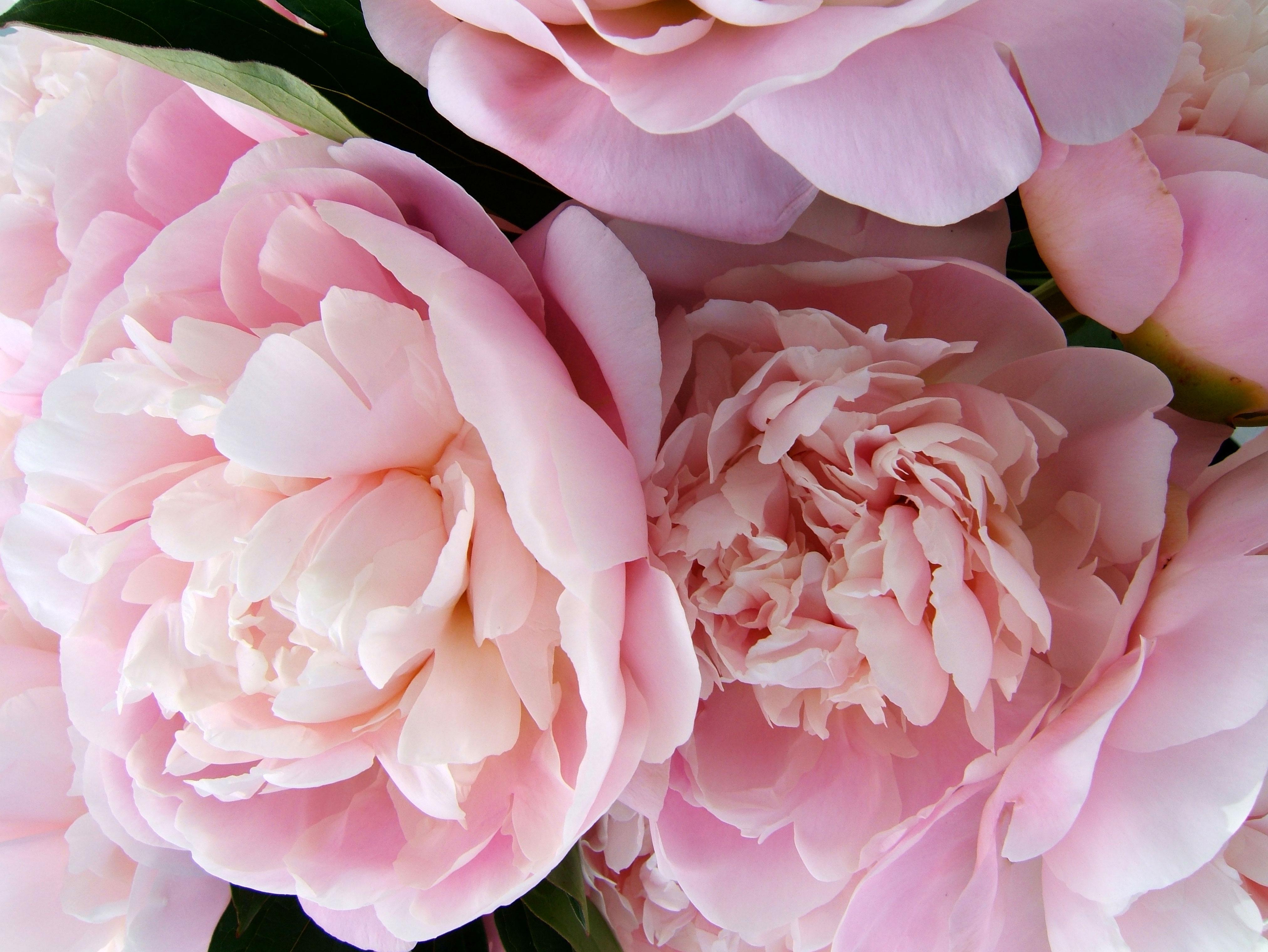 Полевые цветы  стихи