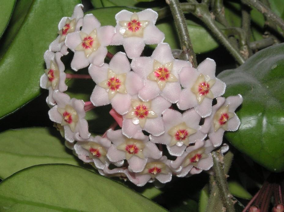 комнатный цветок каталог