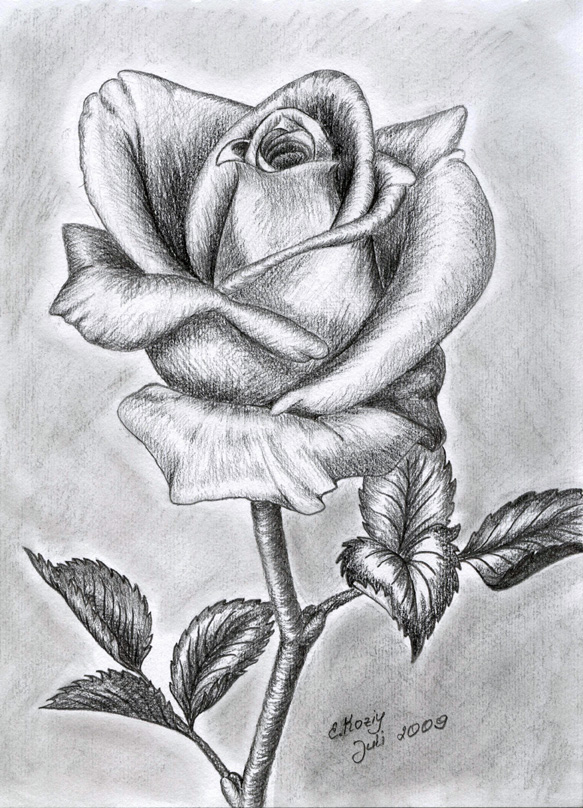 нарисованные картинки карандашом цветов