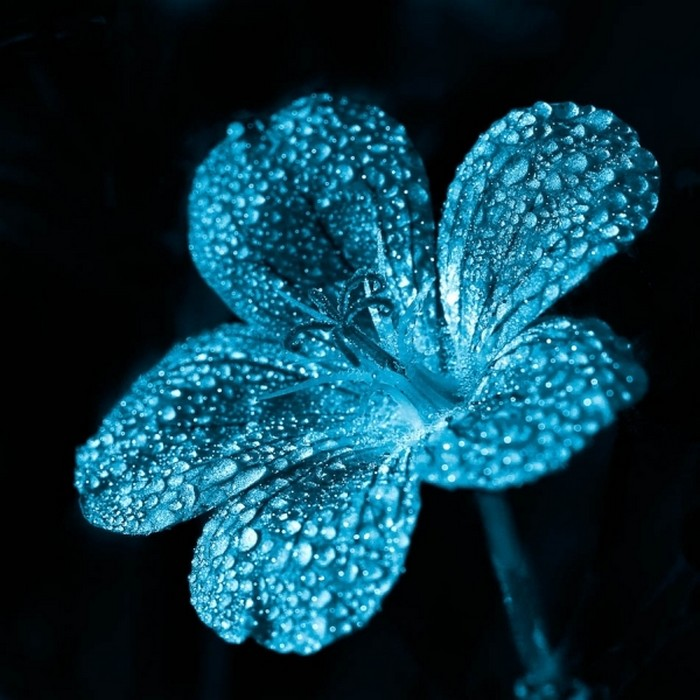 Рисунки цветов красивые