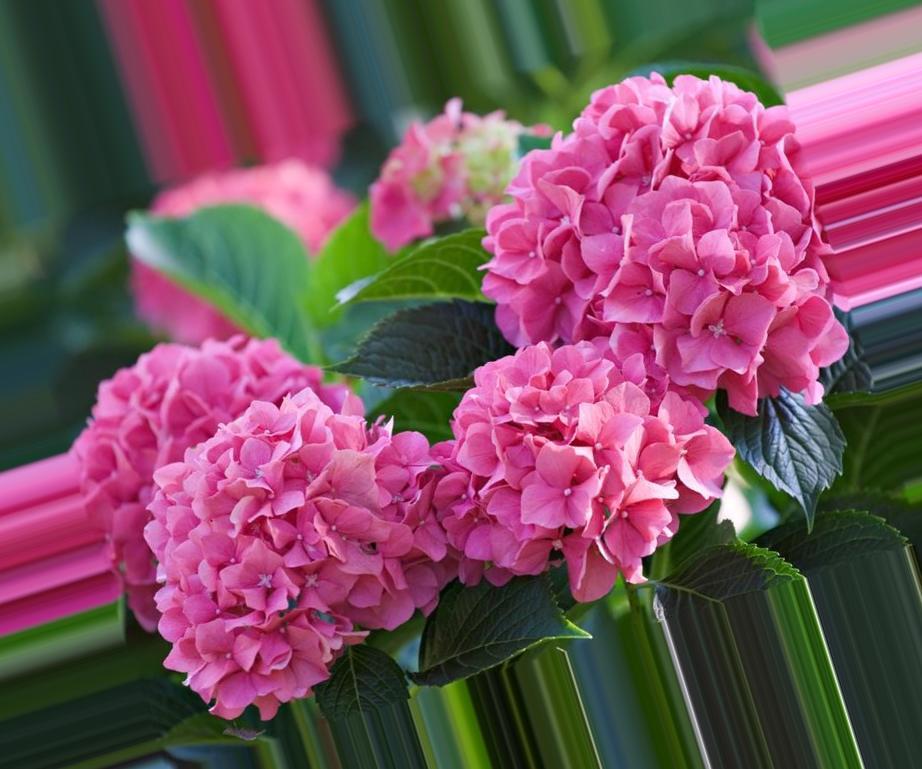 Картинки красивых цветов для подарка