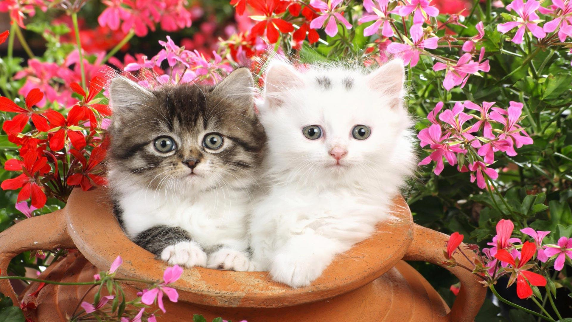 котята с цветами картинки