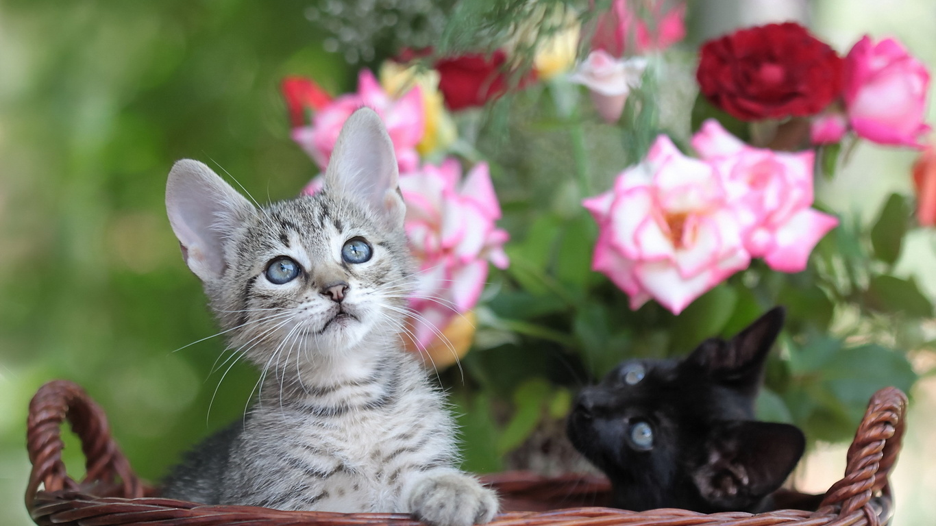 Фото котенка с цветами