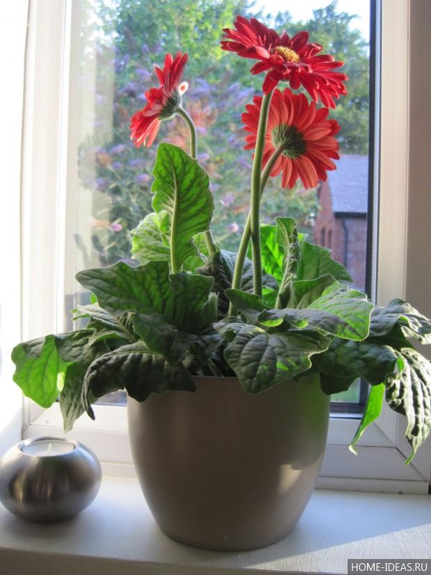 Цветок в горшке как ухаживать в домашних условиях