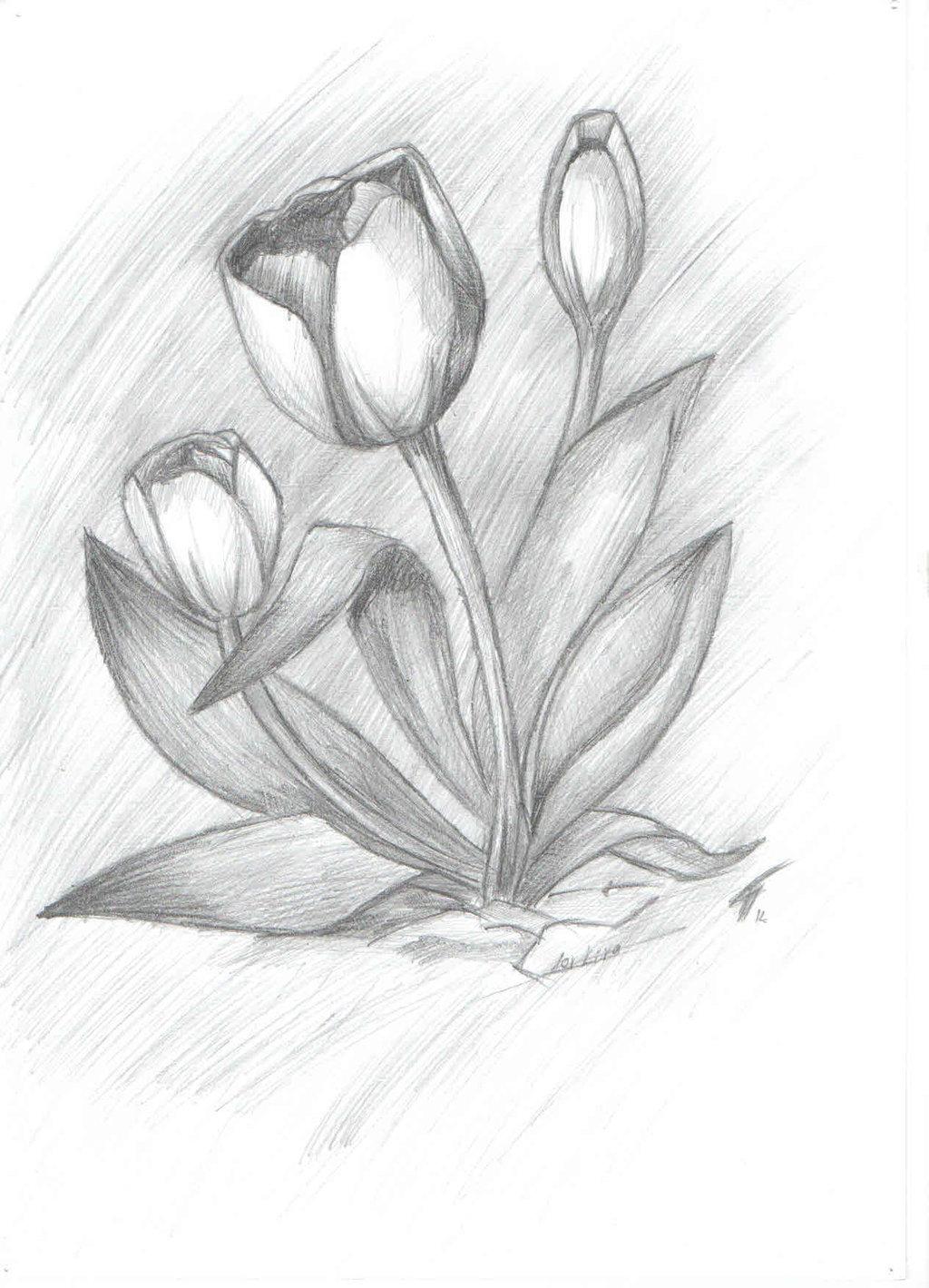 Цветы рисунки в карандаше