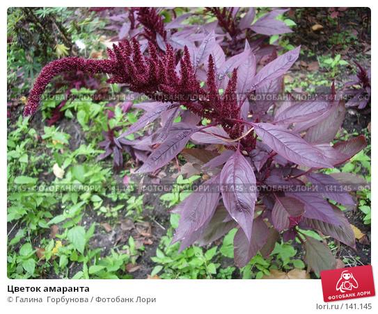 Цветок амаранта и описание