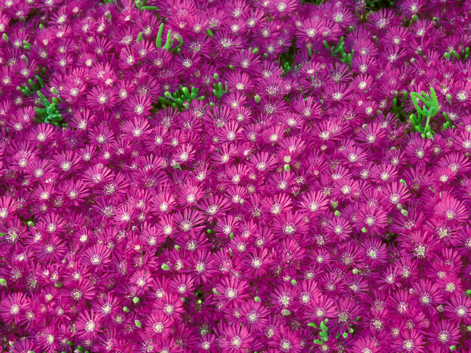 Самые мелкие цветы