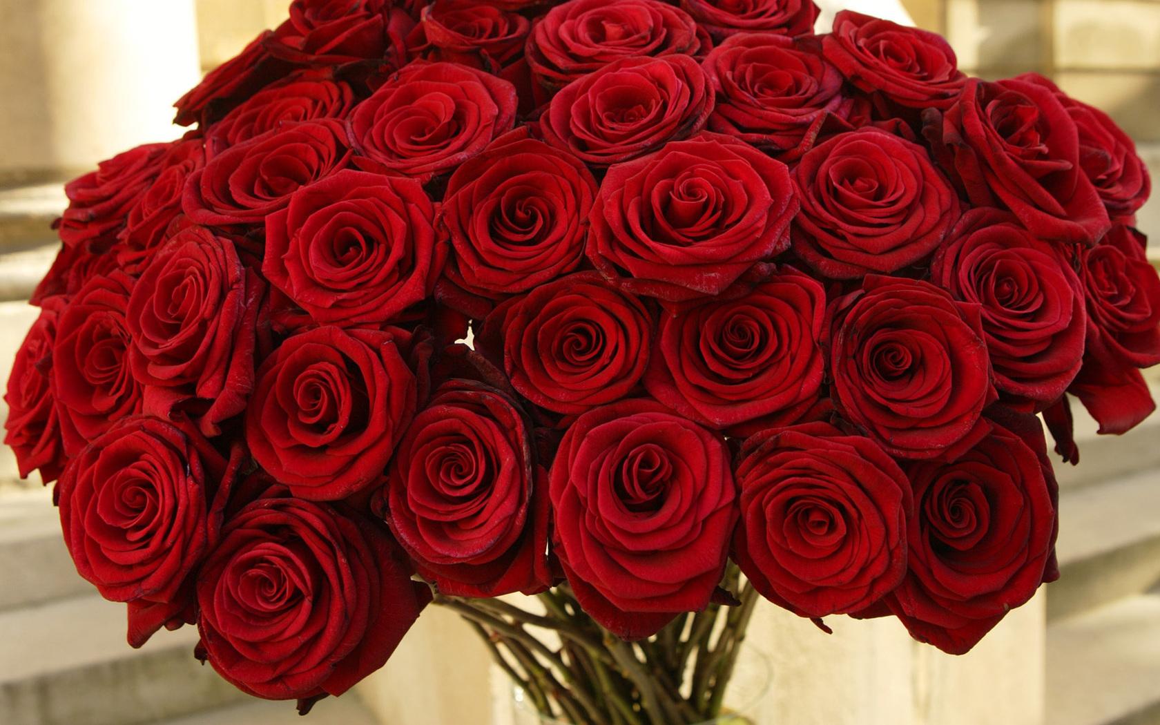 розы картинки цветы скачать