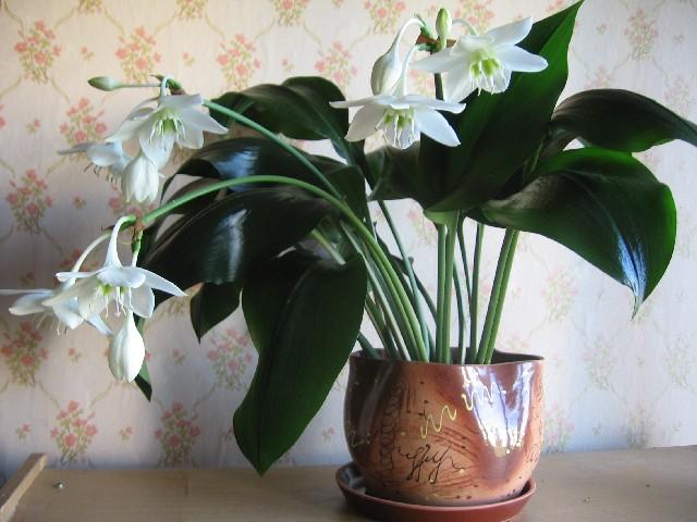 Фото цветов с большими листьями