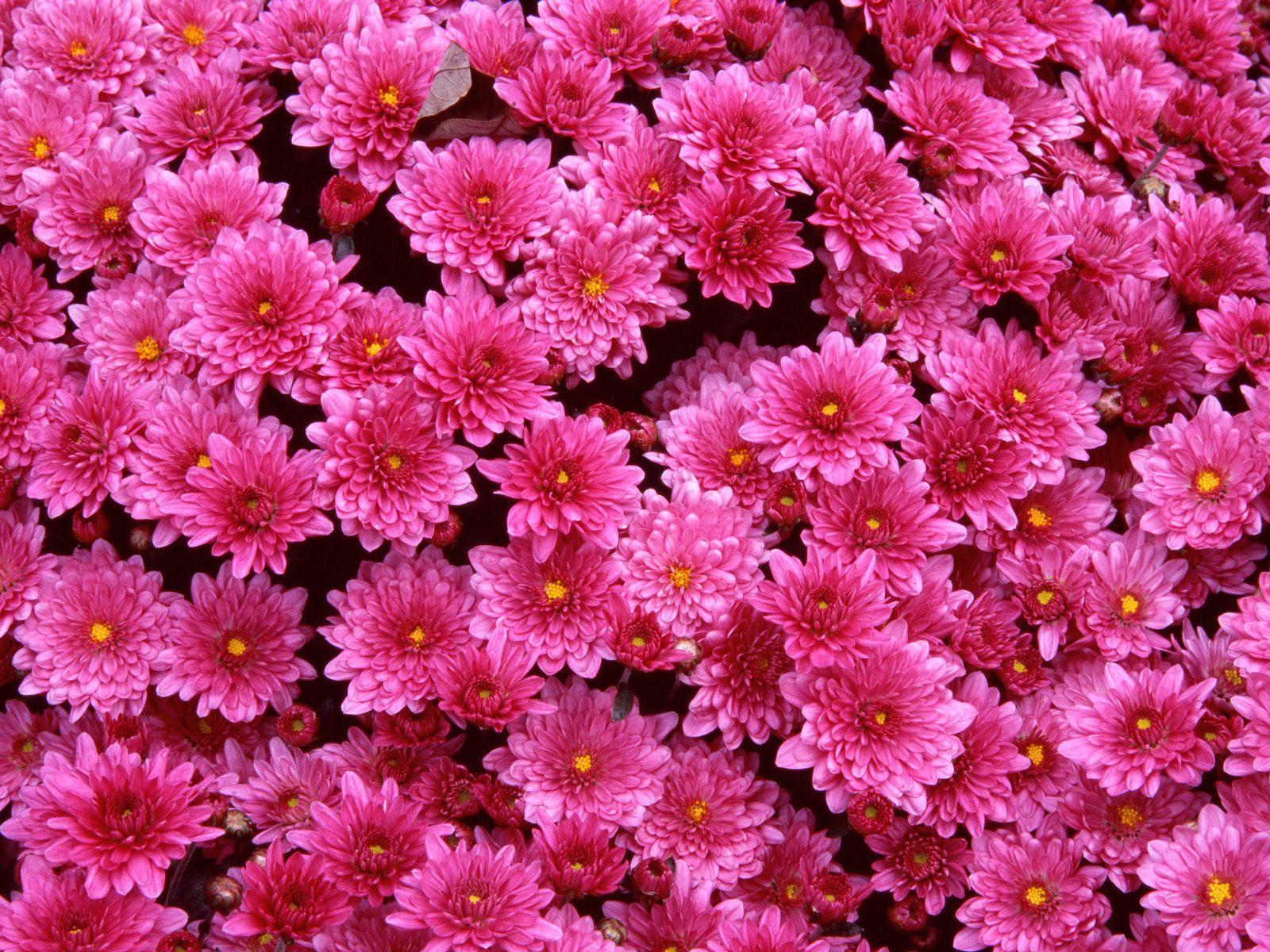Фото очень красивых цветов 24 фотография
