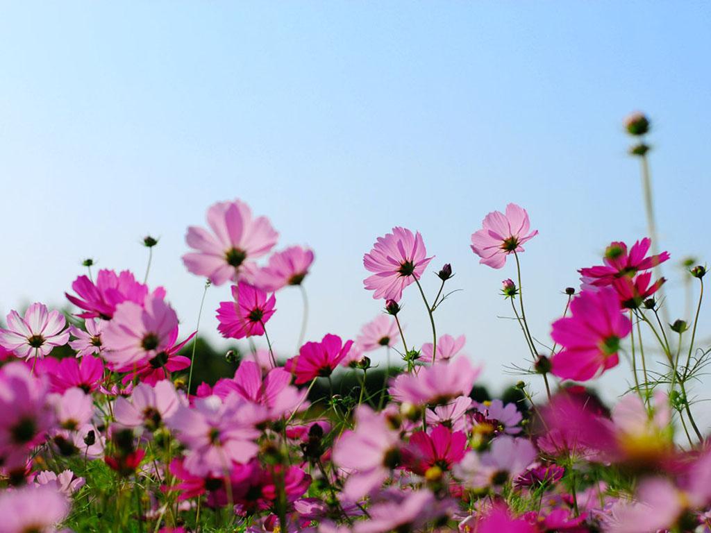 полевых цветов скачать