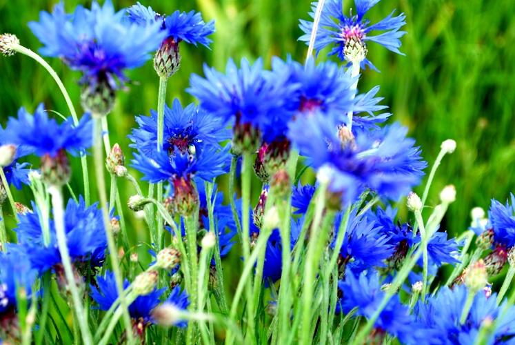 Картинки поля цветов красивые