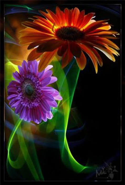 Ночные цветы и название 55