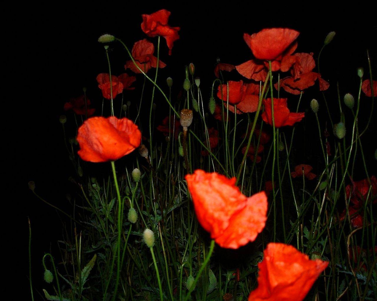 Ночные цветы и название
