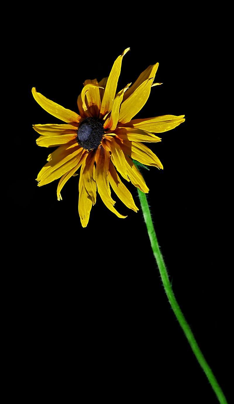 Ночные цветы и название 64